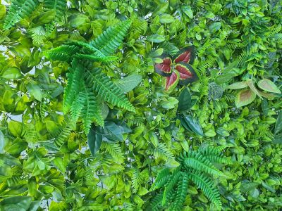 Close up of greenery backdrop for hire